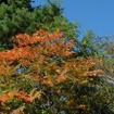 ちょっと時期が早いかなと思いつつ出かけてみたのだが、案の定紅葉はまだ色づき始めだった。しかし、絶好の晴天と山々のコントラストは見事なものだった。