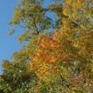 福島県側は新潟県側より若干紅葉が進んだ印象だった。