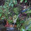 道端で湧水を発見。飲んでみたが素敵にうまかった。