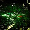 メルセデスAMG GT Rの予告イメージ