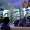 『Sony Aquarium』