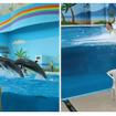 「海の動物たちのショー ~Jump Jump Jump~」