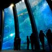 「群れと輝きの魚たち」