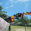 大判スカーフはオーストラリア人の女性たちに人気