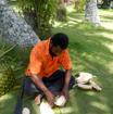 男性軍によるココナッツの葉のカゴ作り