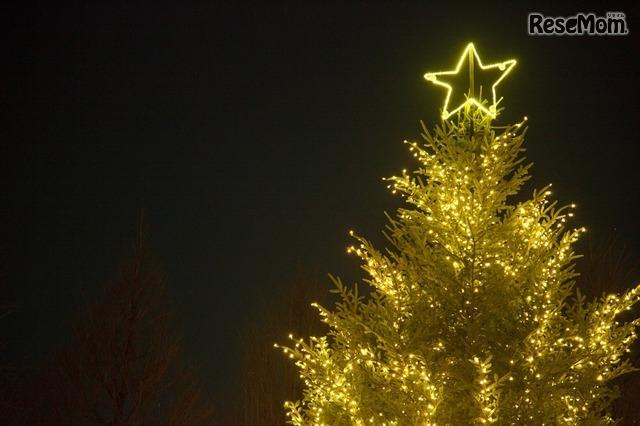 明治学院大学 白金キャンパス・ツリーの上には大きな星が点灯